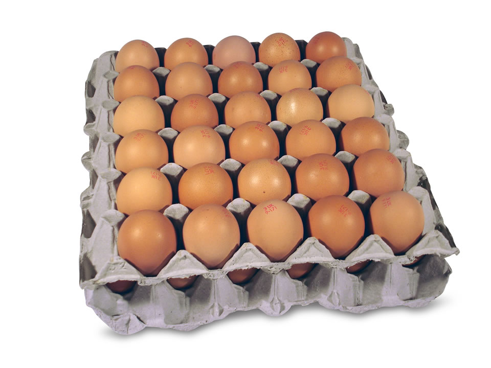 31823 LOCAL EGGS TRAY 30PCS